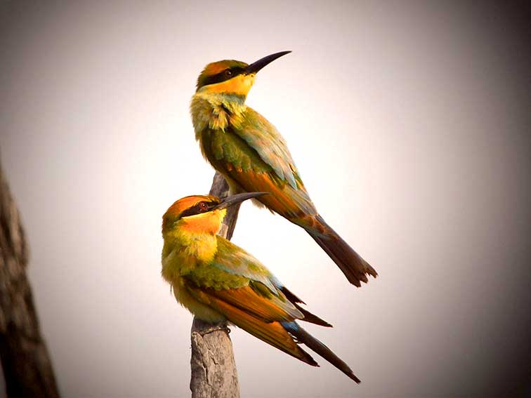 Birds sighted whilst birdwatching in Isisford