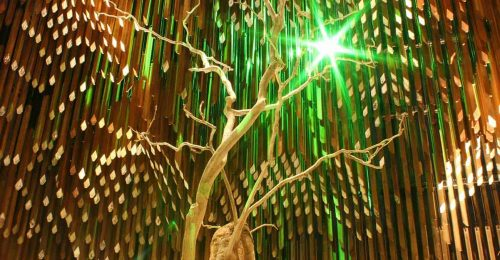 Underneath the branches of Tree of Knowledge at night lit up by green coloured lights