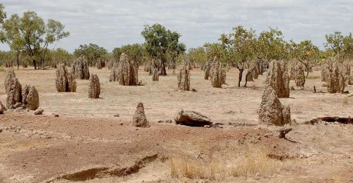 cloncurry-termite-mounts-feature
